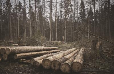 L'Italia taglia il 20% degli alberi: esempio virtuoso?