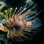 Specie invasive in Italia, al via una campagna informativa