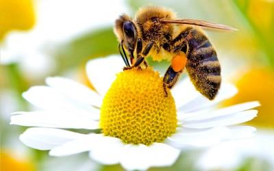 Che mondo sarebbe senza le api?