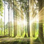 La Fao pubblica il report sullo stato delle foreste nel mondo