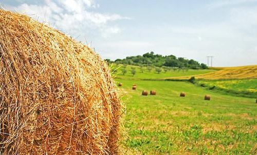 """Assegnate 42 """"spighe verdi"""" ai comuni rurali più green d'Italia"""